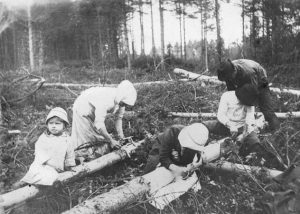 Petäjän kuorta kerätään leivän jatkeeksi Kuopiossa vuonna 1918 (Kansan Arkisto).